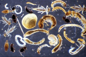 A macroinvertebrate collage image for use with the Crunch Game activity.