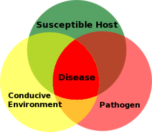 Figure 7.29: An illustration of the disease triangle. For a diesease to spread, a pathogen, host, and favorable environment are all necessary. Image from URL: http://en.wikipedia.org/wiki/File:Plant_Disease_Triangle.png