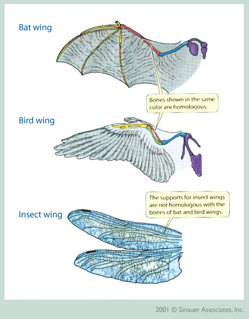 Figure 6.44: The image above illustrates differences between various types of wings. Image from URL: http://www.peabody.yale.edu/exhibits/treeoflife/images/convergence4.jpg