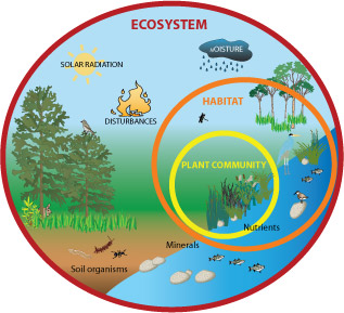 Figure 7.1: The graphic above illustrates how plants and plant communities fit into broader ecosystems by providing habitat, preventing erosion, and affecting water and nutrient cycling. Image from URL: http://www.fws.gov/