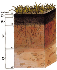 Figure 3.3: If you look in a soil pit or on a roadside cut, you will see various layers in the soil. These layers are called soil horizons. The arrangement of these horizons in a soil is known as a soil profile. Image from URL: http://soils.usda.gov/