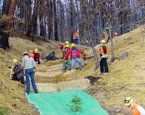 Figure 9.11: Volunteers and NRCS employees apply erosion control netting, construct straw check dams, and use straw mulching to reduce erosion in this small, ephemeral drainage that was severely burned in the Bitterroot Valley during 2000. Image from URL: http://www.mt.nrcs.usda.gov/technical/fires/netting.html