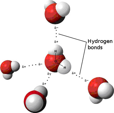 Figure 4.6: Each water molecule can make or accept two H-Bonds, the strong attraction between hydrogen atoms on one water molecule to the oxygen atom on another water molecule. Image from URL: http://en.wikipedia.org/wiki/Water